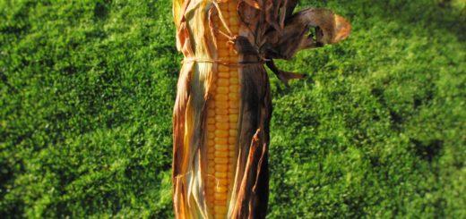 Кукуруза на гриле по-американски